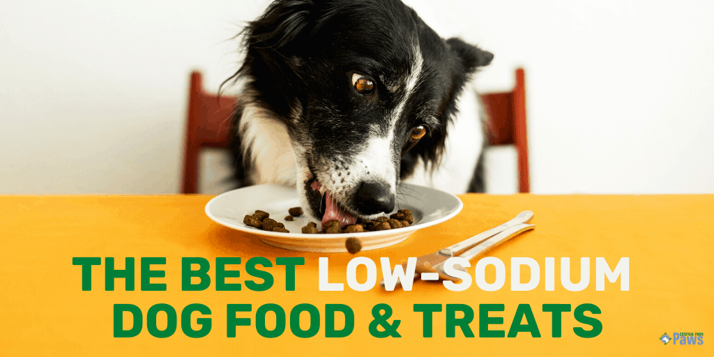 Best Low Sodium Dog Food and Treats