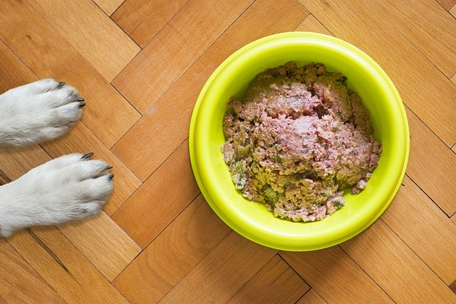 How to choose right soft canned wet food for dogs with no teeth