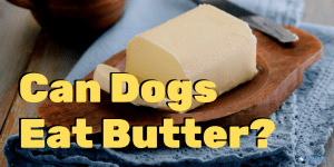 My Dog Ate Butter - Can Dogs Eat Butter