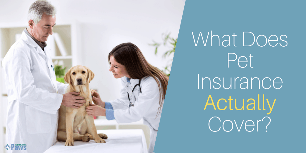 What Does Pet Insurance Actually Cover?