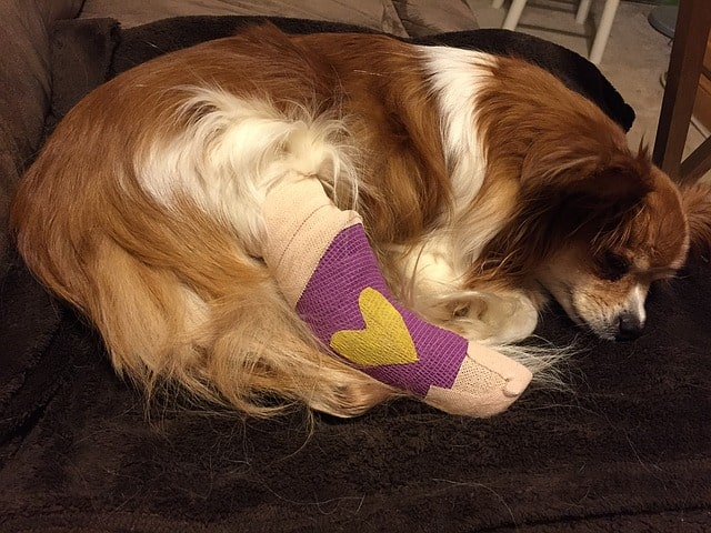 What does dog pet health insurance actually cover accident illness diseases