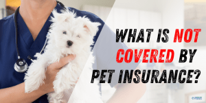 What is Not Covered by Pet Insurance