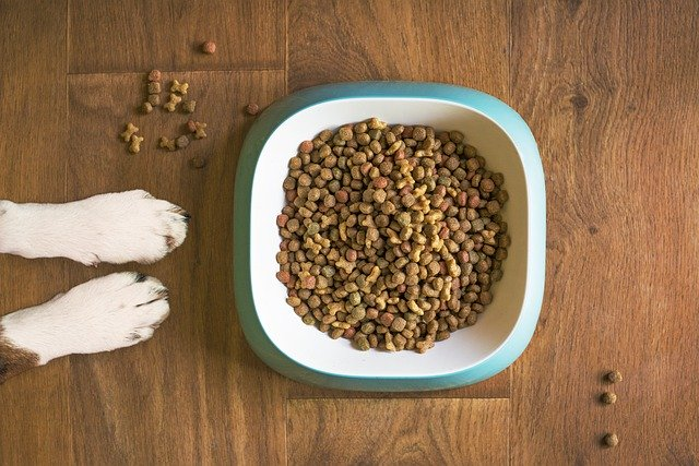 Why choose low sodium dog foods what to look for