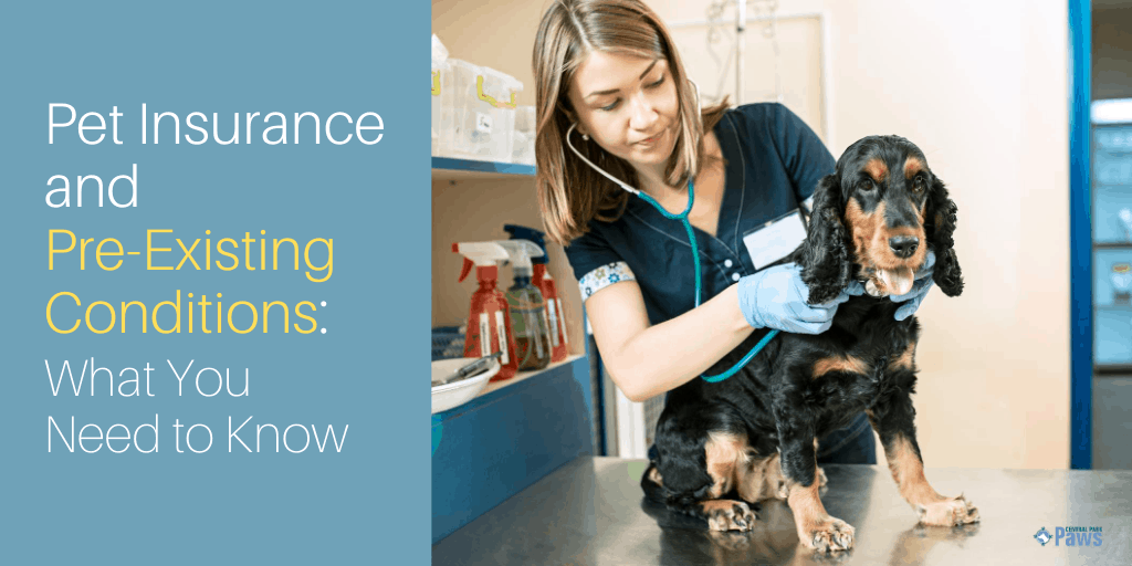 Pet Insurance and Pre-Existing Conditions: What You Need to Know