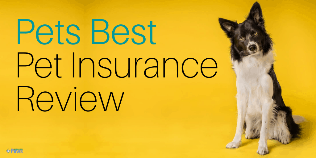 Pets Best Dog Insurance Review