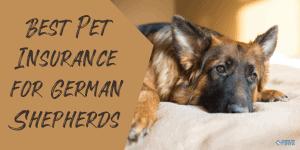 Best Pet Insurance for German Shepherds