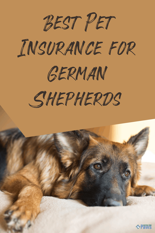 Best Pet Insurance for German Shepherds Pinterest