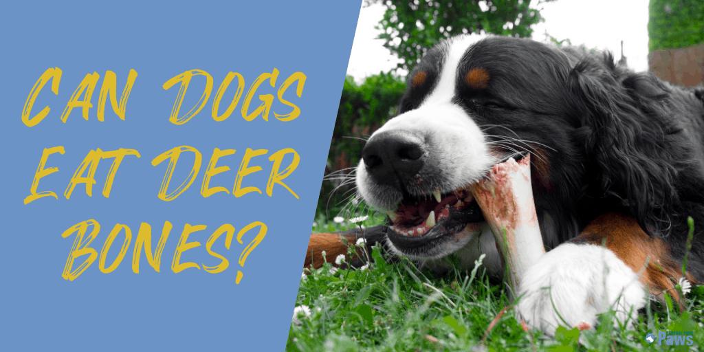 Can Dogs Eat Deer Bones?