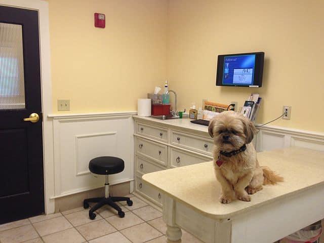 How does pet insurance work at the vet office reimbursements
