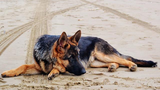 How to choose dog insurance for german shepherd breed hip dysplasia