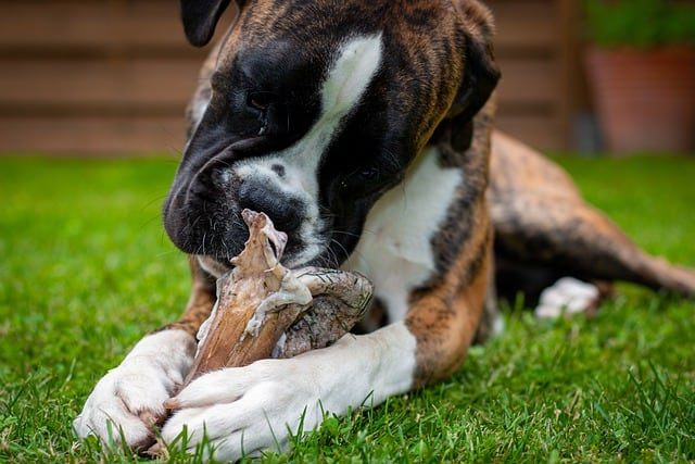 How to safely give deer bone to dog no boiling