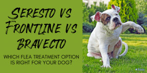 Seresto vs Frontline vs Bravecto - What's the Best Flea Treatment Option