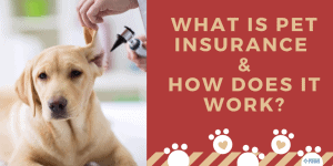 What is Pet Insurance & How Does Pet Insurance Work
