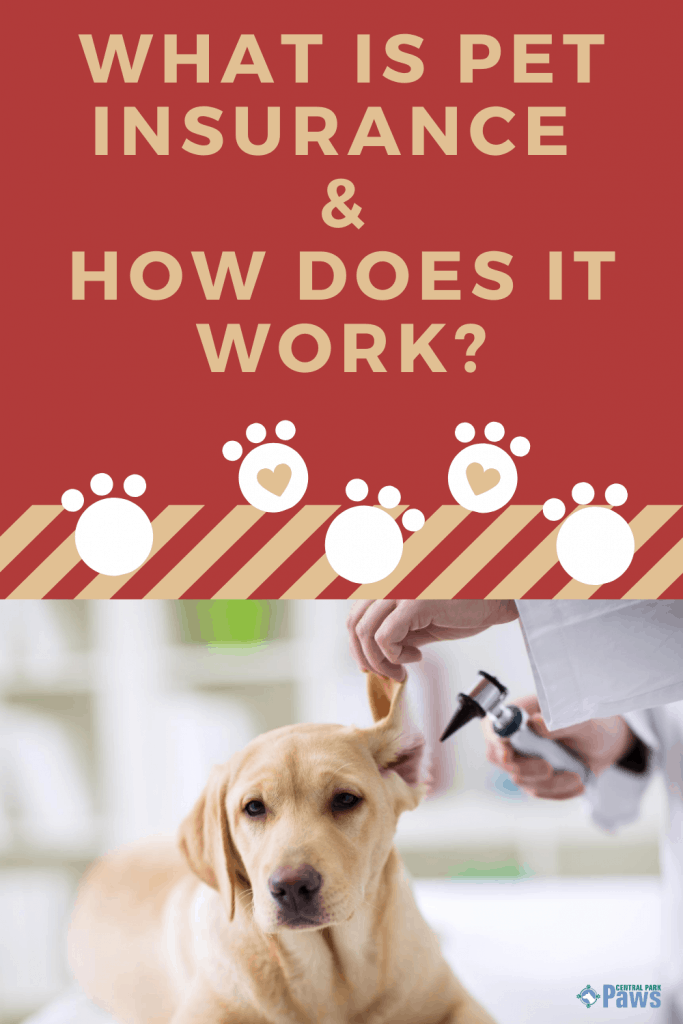 What is Pet Insurance & How Does Pet Insurance Work Pinterest