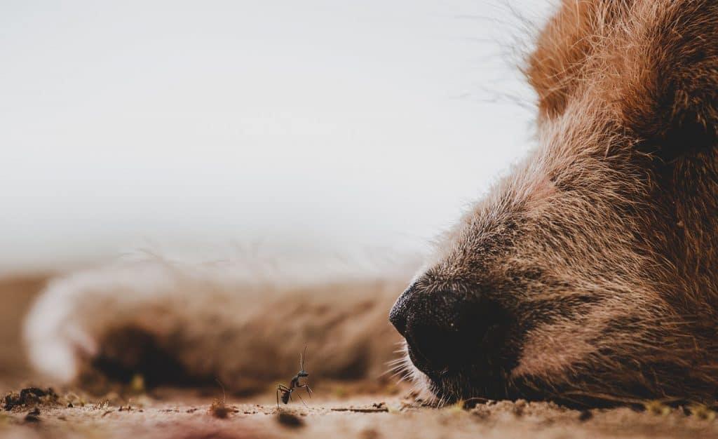 Can dogs eat ant traps poison toxin bait gel liquid granule