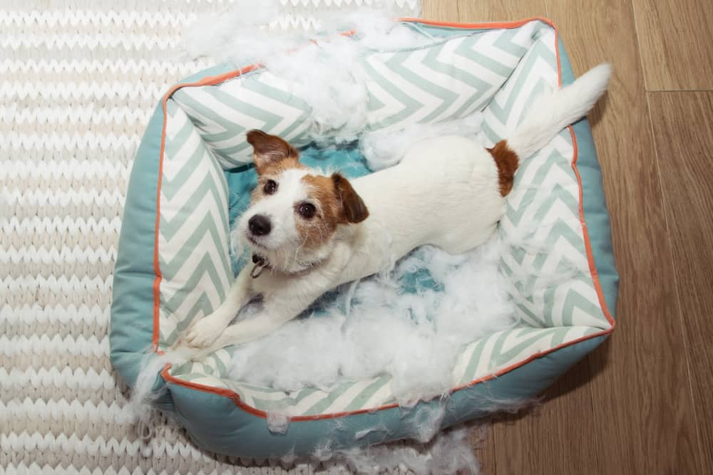 Dog bed chewed up