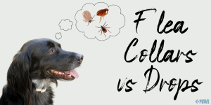 Flea Collars vs Topical Drops_ Which is the Best Flea Treatment