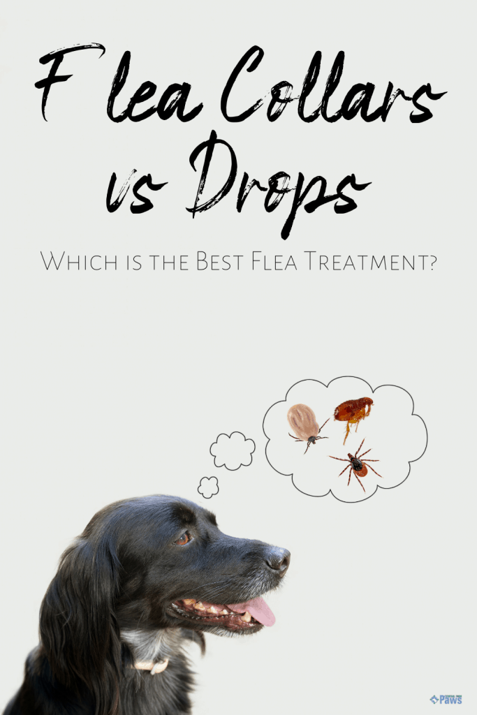Flea Collars vs Topical Drops: Which is the Best Flea Treatment - Pinterest