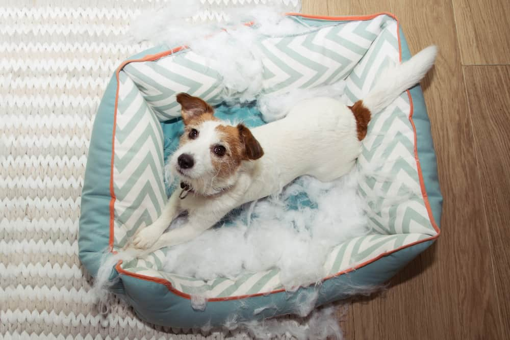 Indoor Activities for Dogs