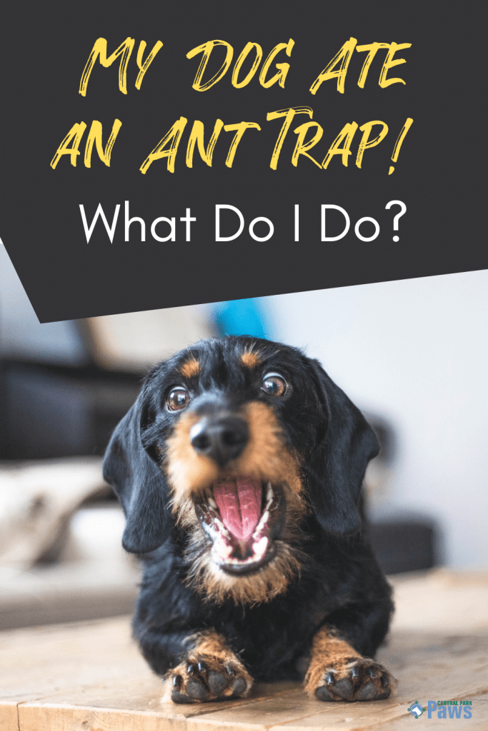 My Dog Ate an Ant Trap, What Do I Do