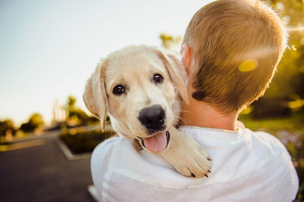 Pets Best insurance review great choice for dog owners