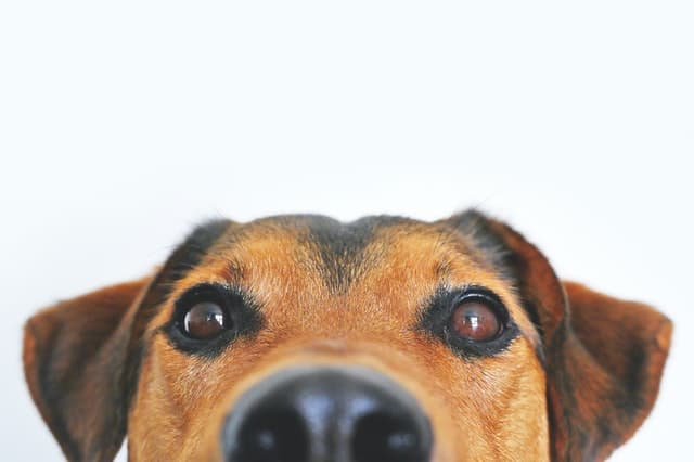 Problems feeding dogs tortillas begging counter surfing bad behaviours