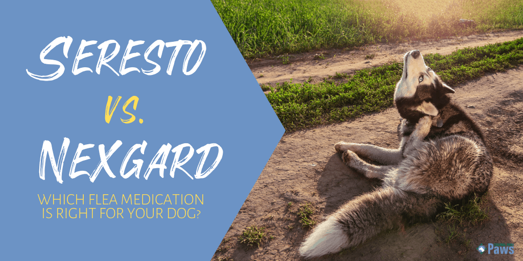 Seresto Collar vs Nexgard Chewables Flea Medication for Dogs