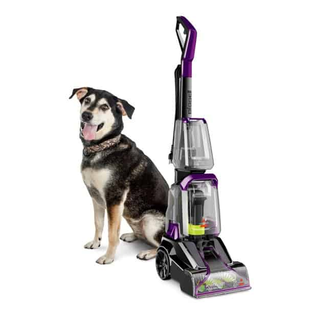 Steam Vacuum kill fleas in home carpet instantly easily