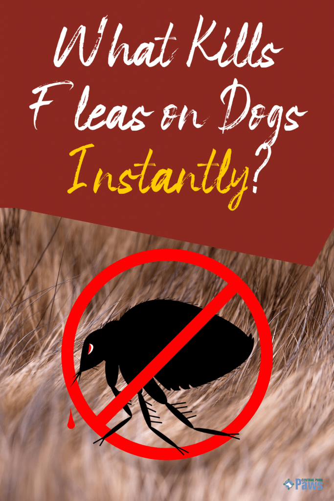 What Kills Fleas on Dogs Instantly - Pinterest