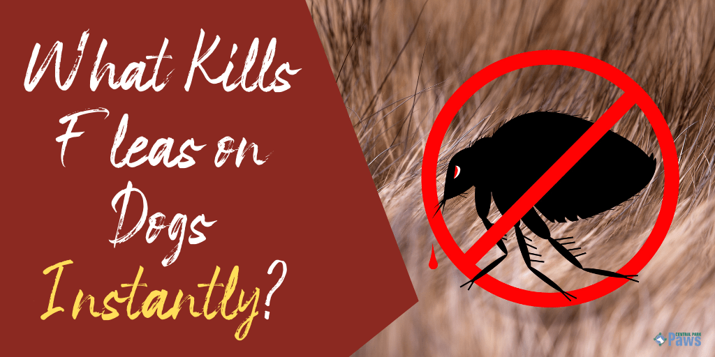 What Kills Fleas on Dogs Instantly