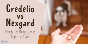 Credelio vs Nexgard Flea Medications