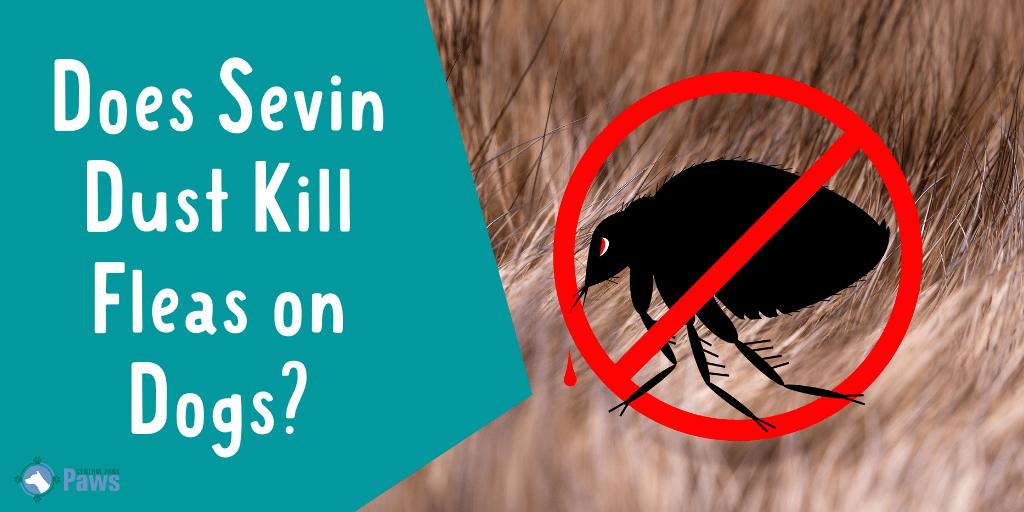 Does Sevin Dust Kill Fleas on Dogs
