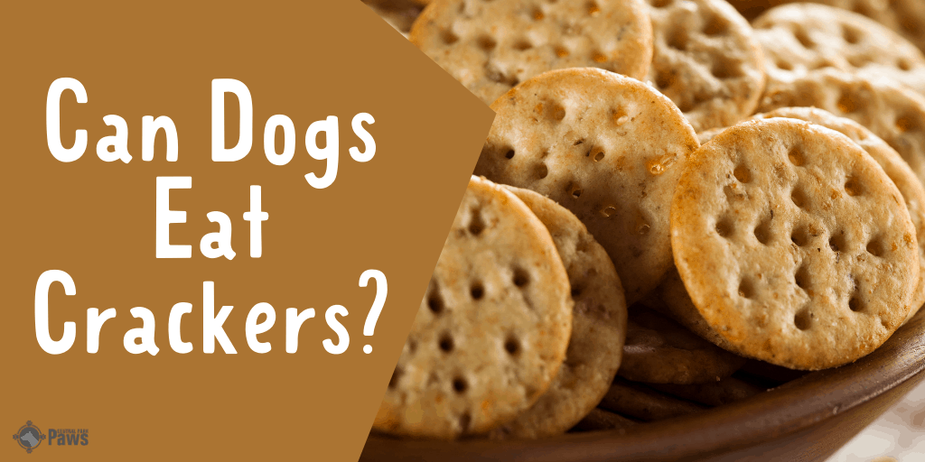 Can Dogs Eat Crackers - Are They Safe to Have