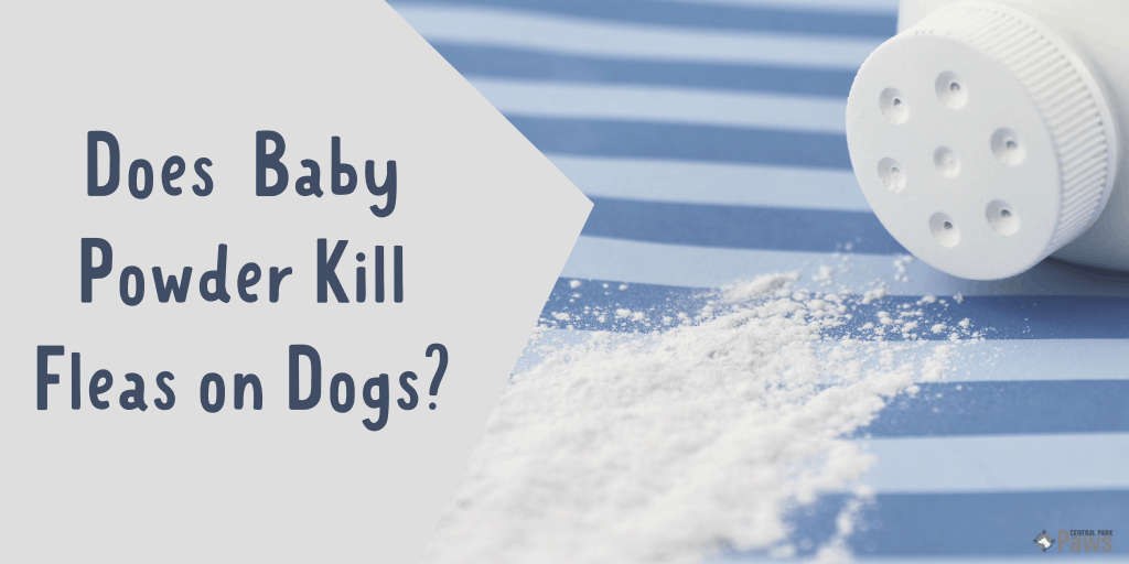 Does Baby Powder Kill Fleas on Dogs - Is it Safe