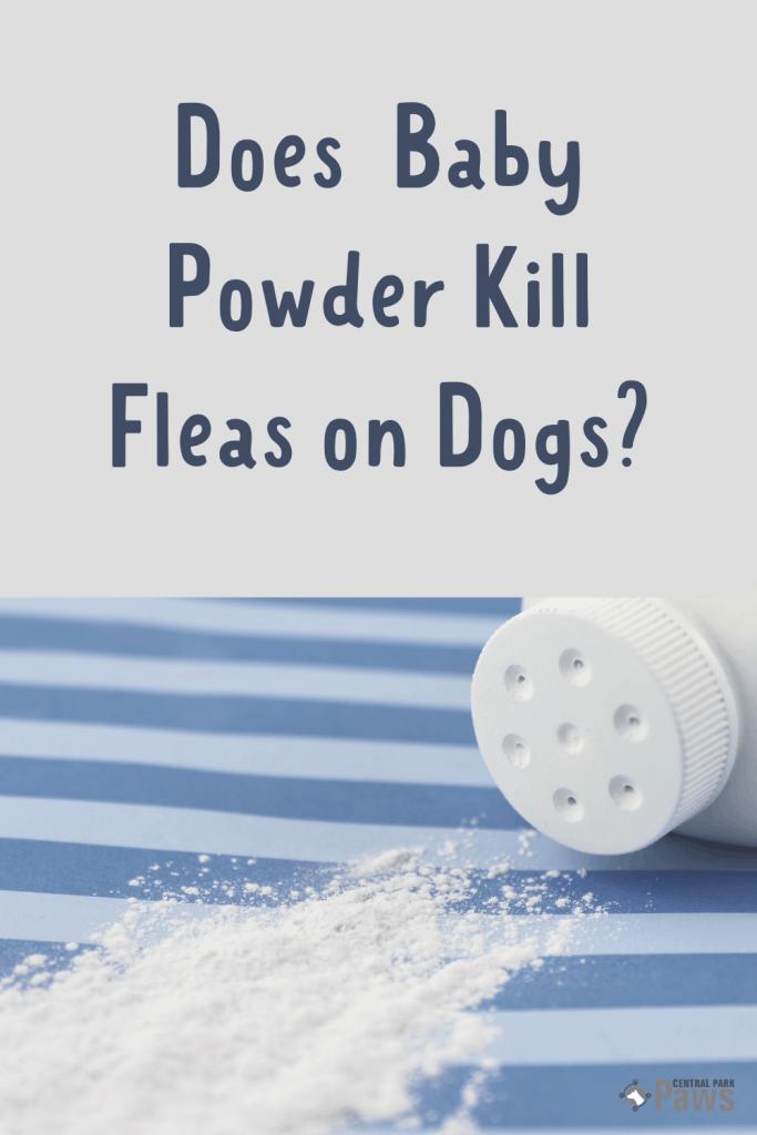 Does Baby Powder Kill Fleas on Dogs - Pinterest