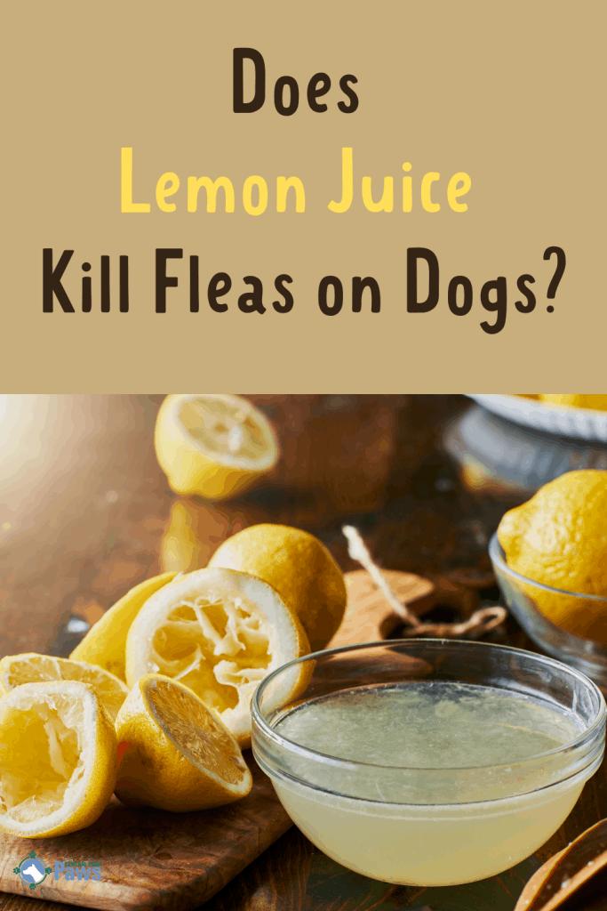 Does Lemon Juice Kill Fleas on Dogs - Pinterest