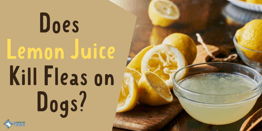 Does Lemon Juice Kill Fleas on Dogs