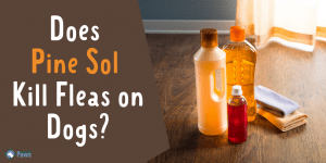 Does Pine Sol Kill Fleas on Dogs - Is It Safe