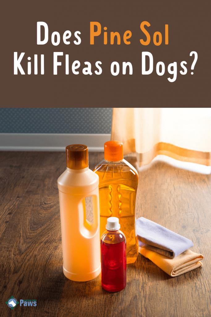 Does Pine Sol Kill Fleas on Dogs - Is It Safe - Pinterest