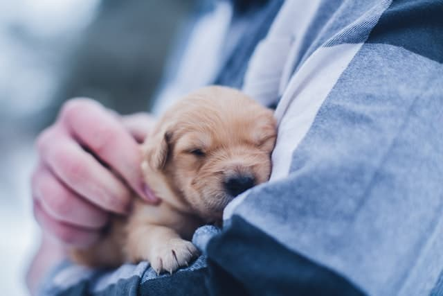Frontline Plus Review puppy safety weeks old effective side effects