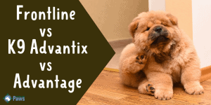 Frontline Plus vs K9 Advantix vs Advantage Flea Treatments