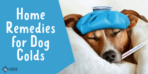 Home Remedies for Dog Colds