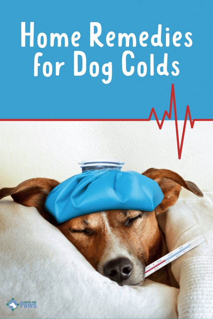 Home Remedies for Dog Colds - Pinterest - Natural Solutions - home remedies for cough