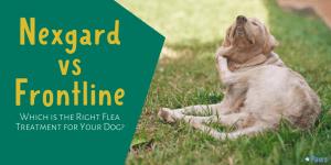Nexgard Chewables for Dogs vs Frontline Plus Flea and Tick Treatment