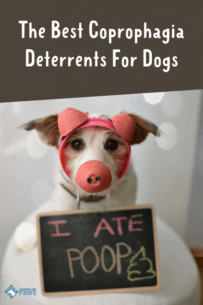 Best Coprophagia Deterrent For Dogs Pinterest