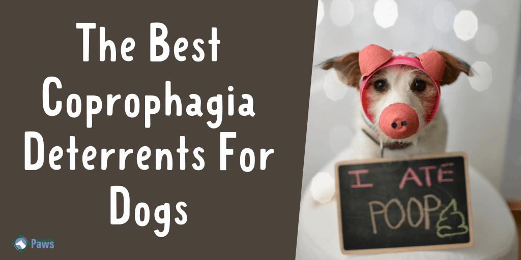 Best Coprophagia Deterrent For Dogs