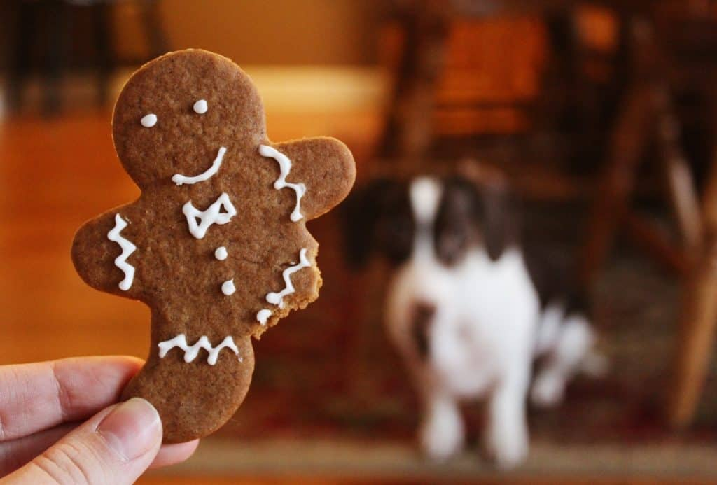 Can dogs eat crackers full of sodium sugar fat unhealthy for dogs