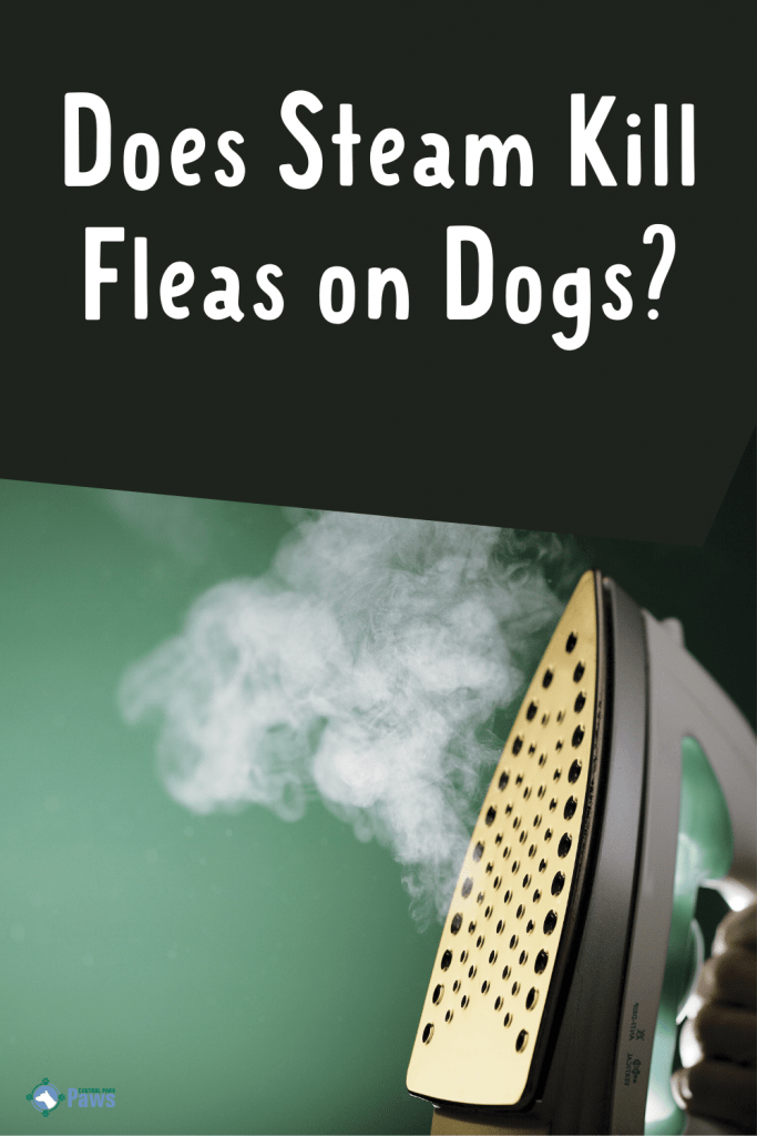 Does Steam Kill Fleas on Dogs Pinterest