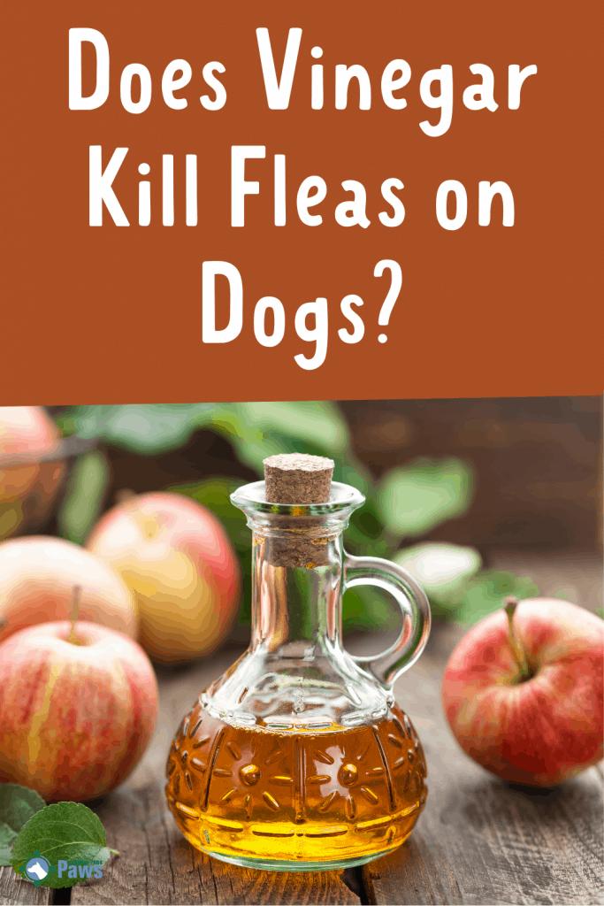 Does Vinegar Kill Fleas on Dogs Pinterest