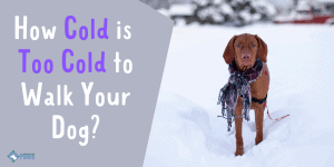 How Cold is Too Cold to Walk Your Dog in Winter Snow